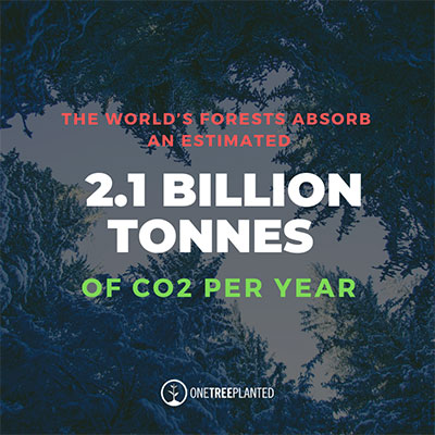 The world's forst absorbs an estimated 2.1 billion tonnes of CO2 per year